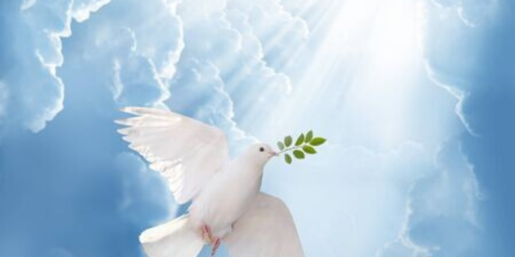 Dove returning to Noah